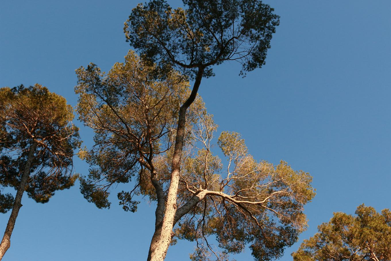 La chioma degli alberi paola ricci taste archaeologist for Chioma albero